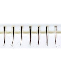 Lashes Thin Short Bottom